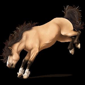 Pegaso da corsa Cavallo islandese Daino