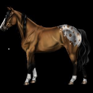 Jazdecký Pegas Tennesseesky mimochodník svetlý hnedák