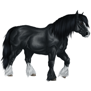 Draft horse Shire Black
