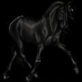 Верховая лошадь Хановериян, Ганноверская Вороная