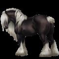 Pegaso de tiro Drum Horse Pío Tovero negro