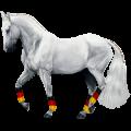 Cavalo de passeio Mangalarga Marchador Tordilho ruço