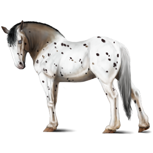 Draught horse Shire Light Grey