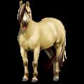 Pony Fjord Brunblakk