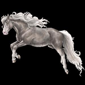 Pony Chincoteague Pony Black