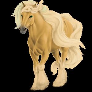Tažný kůň Drum Horse Vraník Tovero