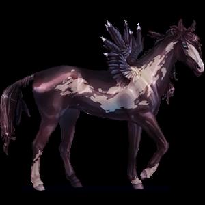 Pégase de selle Quarter Horse Bai Cerise