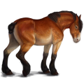 Cheval de trait Drum Horse Bai