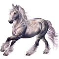 Draft horse Percheron Light Gray