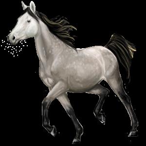 Riding Horse Russian Don Horse Dapple Gray