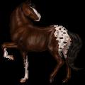 Верховая лошадь Американская кучерявая Рыжая