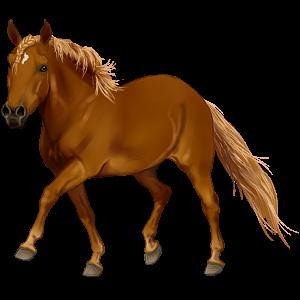 Pony Kerry bog Rød