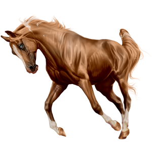 Riding Horse Akhal-Teke Chestnut