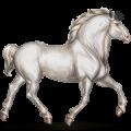Cheval de trait Percheron Gris Clair