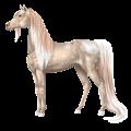 Riding Horse Vanner Dapple gray Tobiano