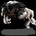 Riding Horse Vanner Palomino