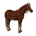 Pony Newfoundland Pony Light Gray