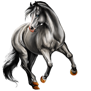 Riding Horse Lipizzan Dapple Grey