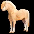 Pony Gulblakk