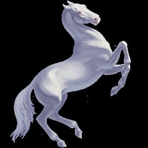 Верховая лошадь Французский Рысак Гнедая