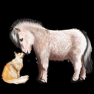 Pony Norweger Braunfalben