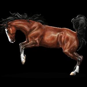 Riding Horse Quarter Horse Chestnut