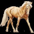 Riding Horse Akhal-Teke Palomino