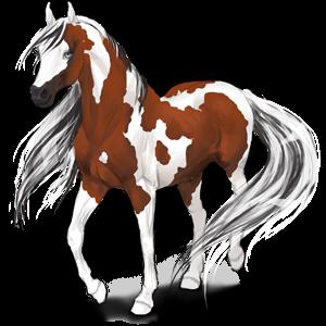 Jezdecký kůň Anglický plnokrevník Černý hnědák