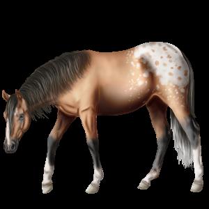 Riding Horse Curly Dun Tobiano