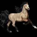 Riding Horse Arabian Horse Dun