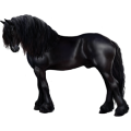 Cavalo de passeio Quarto de Milha Palomino