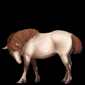 Poník Shetlandský pony Hnědák Tobiano