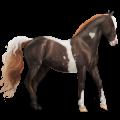 Koń wierzchowy Koń hanowerski Gniada