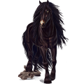 Draft horse Drum Horse Black Tobiano
