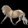 Pony Fjord Rodblakk