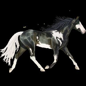 Riding Horse Shagya Arabian Fleabitten Gray