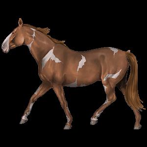 Ridepegasus Paint horse Rødbroget Overo