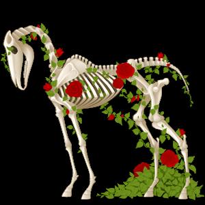 Koń wierzchowy Koń czystej krwi arabskiej Ciemnogniada