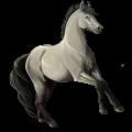Riding Horse Icelandic Horse Dapple Gray