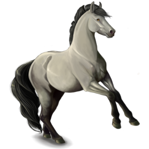 Riding pegasus Lipizzan Light Gray