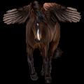 Ratsupegasos Mustangi Rautias, täplikäs loimikuvio
