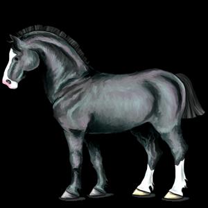 Tažný kůň Percheron Smíšený bělouš