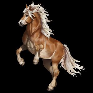 Pony Fjord Gulblakk