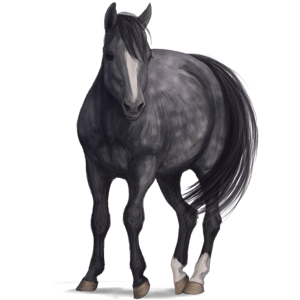 Pony Quarter Pony Dapple Gray