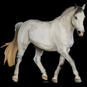 Pegasus Connemara-Pony Fuchs