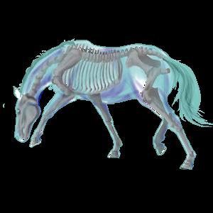 Koń wierzchowy Mustang Myszata