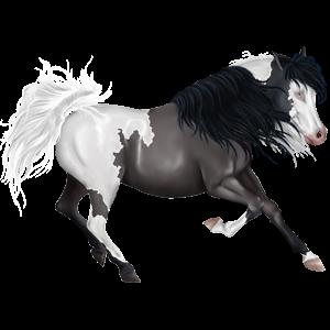Jazdecký kôň Francúzsky jazdecký kôň čierny ryšiak