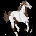 Cavalo de passeio Tordilho ruço