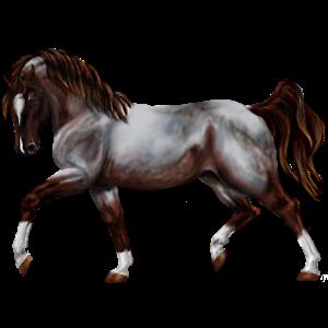 Pony Kerry Bog Dun
