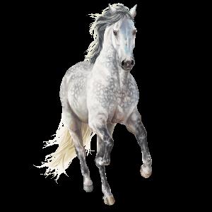Pegasus Argentinischer Criollo Falbe